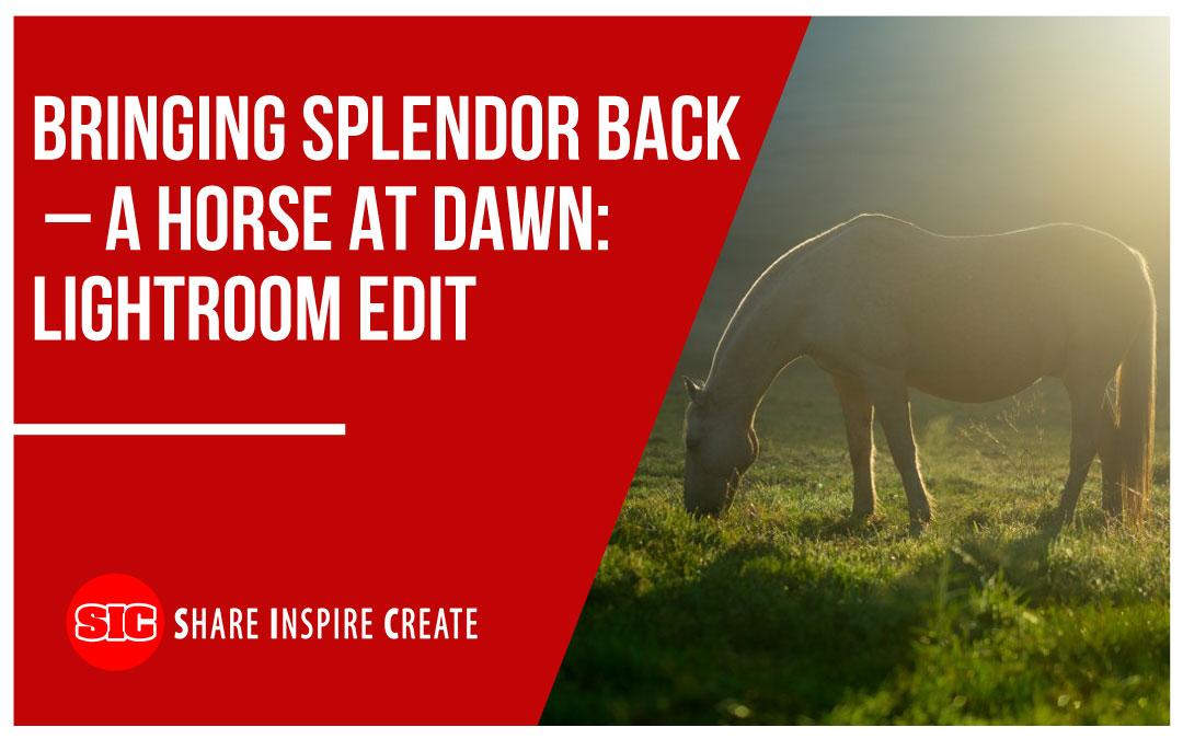Bringing Splendor Back – A Horse at Dawn: Lightroom Edit