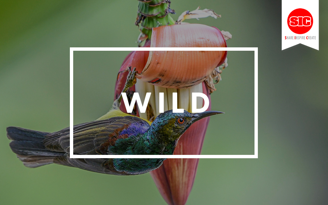 Discover Your WILD Side