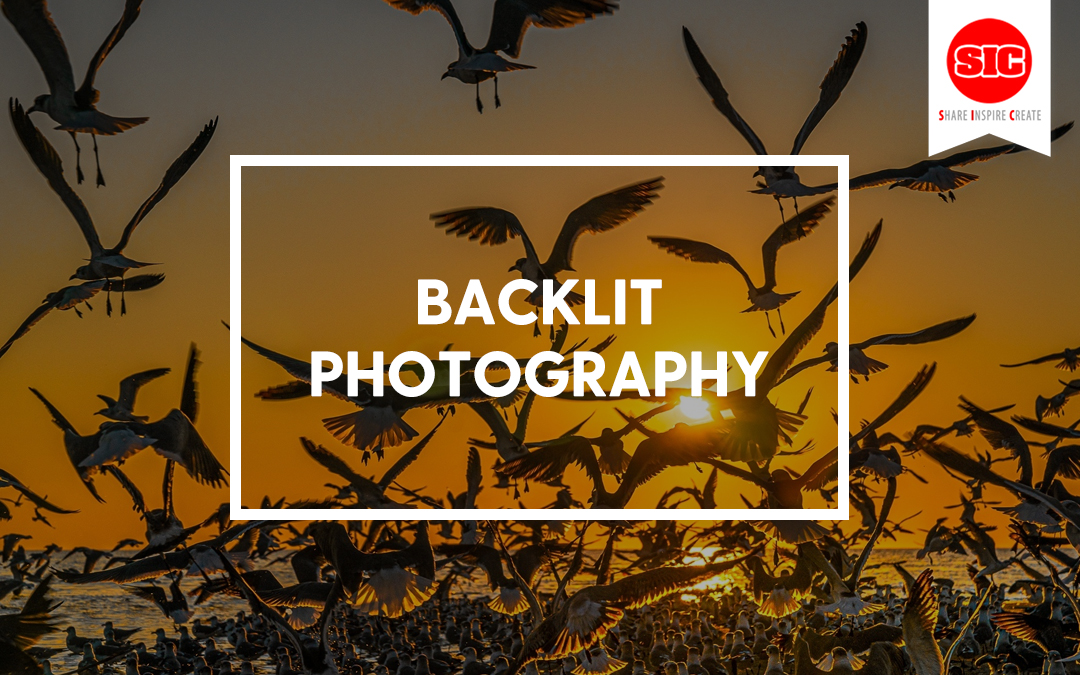 Backlighting As A Creative Tool In Photography