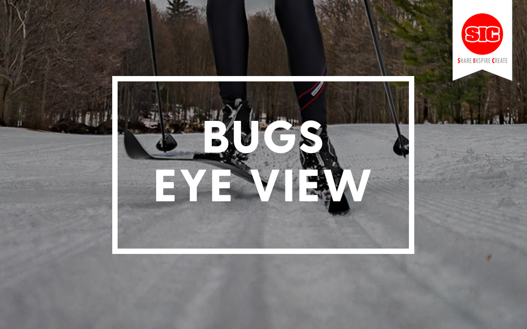 Exploring The World From A Bug's Eye View