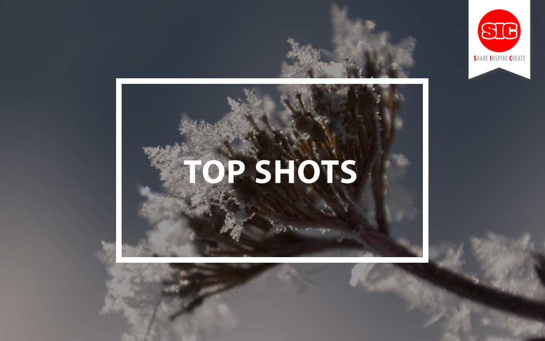Choosing Your Top Shots And Best Images From The Past Year